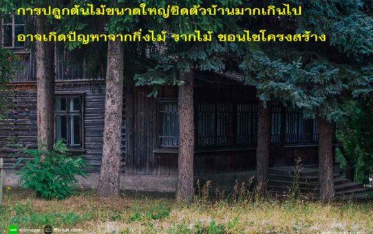 การปลูกต้นไม้รอบบ้าน